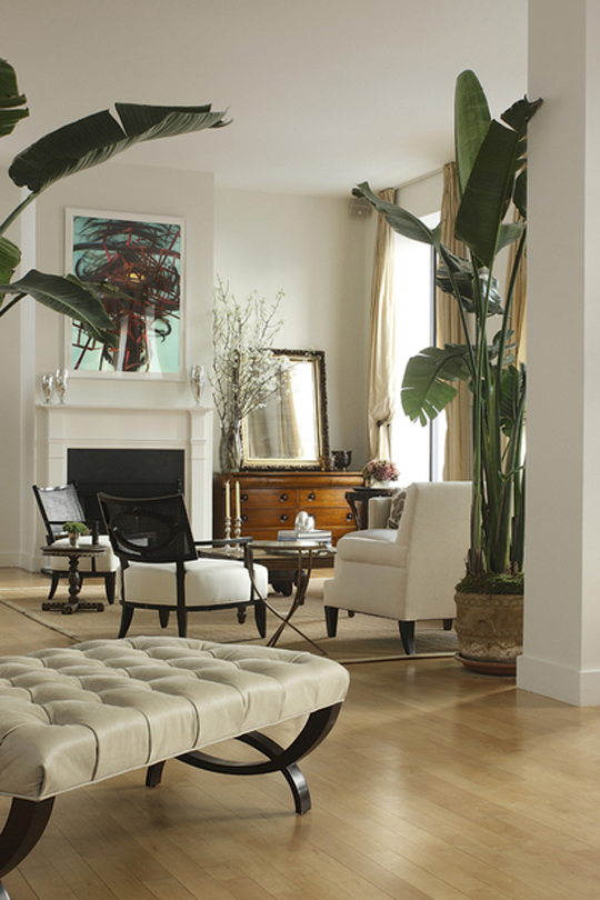 Indoor trees meghan carter Large living room plants