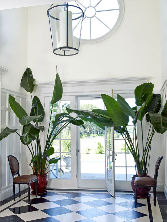 Banana Plants - Indoor Trees - Black and White Foyer